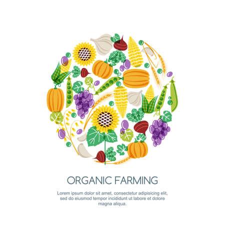 produits céréaliers: Couleur d'automne de récolte illustration. Vector tiré par la main des légumes et des céréales de grains icons set. Les éléments de conception pour l'agriculture, la récolte, les jardins, la ferme et l'agriculture des produits biologiques.
