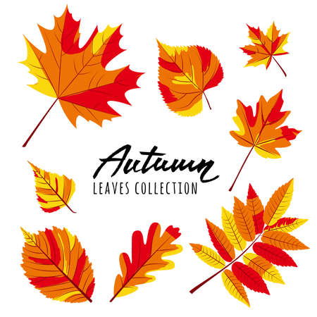 Set of vector autumn leaves. Yellow and red hand drawn fall leaves and calligraphy lettering. Isolated design elements.