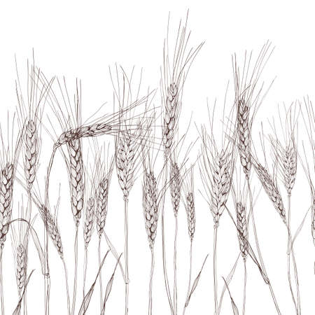 A Vector seamless horizontal background with isolated ear of wheat. Black and white hand drawn sketched wheat. Concept for agriculture, organic cereal products, harvesting grain, bakery, healthy food.