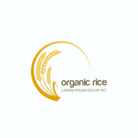 Vector logo, label or package circle emblem with yellow rice, wheat, rye grains. Design template for asian agriculture, organic cereal products, bread and bakery. Çizim