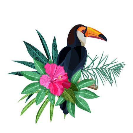 Bird toucan on branch vector illustration Illustration