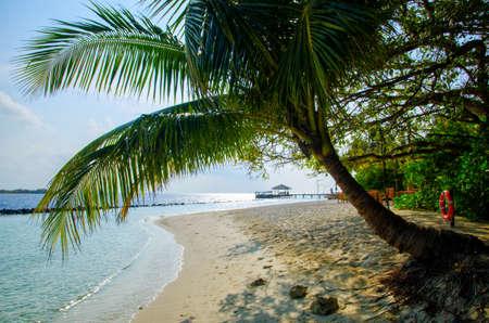 Silhouette of palm tree of beautiful white sand tropical beach landscape. 版權商用圖片
