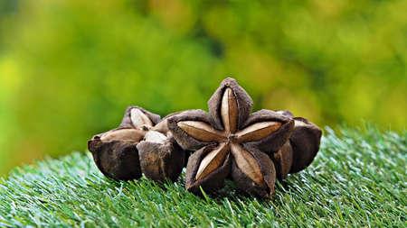 Sacha inchi or Inca nuts. Dried Sacha Inchi nuts on green grass in garden. Banco de Imagens