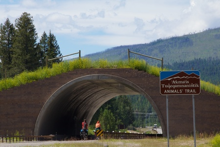 crossings: Animals' Trail, Flathead Indian Reservation, Montana Stock Photo
