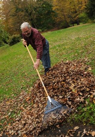 Senior man raking leaves in New England. Stock Photo - 6666659