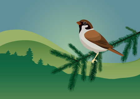 Sparrow spruce twig. Little bird sitting on a pine branch. Landscape view of a bird. Illustration