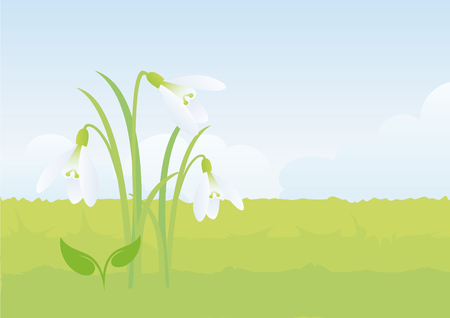 contentment: Snowdrop, the first flower of spring. Spring vector illustration. Gentle spring background with snowdrop.
