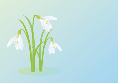 springy: Snowdrops on a blue background. Spring vector illustration. Vector background with snowdrop. Illustration