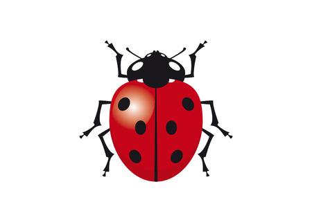 Ladybug vector clip art. Vector illustration of ladybug. Ladybird on a white background