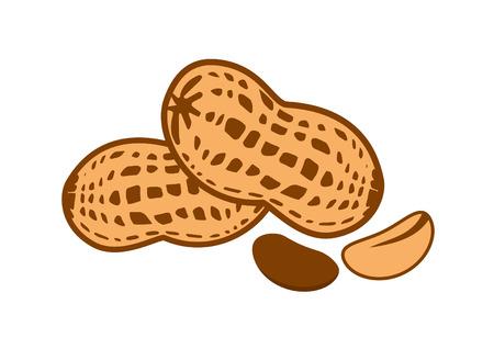 goody: Peanut vector illustration. Peanut on a white background