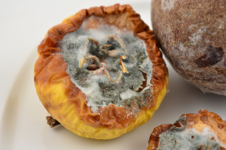 Rotten apple stock images. Moldy fruit on a plate. Moldy apple and on a white background