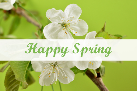Happy Spring greeting card images. Blooming cherry tree stock images. Cherry branch on a green background. Spring floral decoration. Spring background concept. White cherry blossom flowering branch