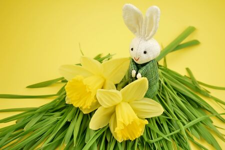 Bunny with bunny stock images. Yellow daffodils with Easter bunny. Easter decoration on yellow background. Spring decoration images. Narcissus flower images