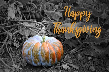 Happy Thanksgiving pumpkin illustration. Thanksgiving greeting card. Beautiful autumn decoration with pumpkins. Halloween pumpkin decoration. Orange gourd on black background