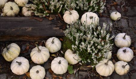 White Pumpkins Decoration stock images. Pumpkins in the garden. Beautiful autumn decoration with pumpkins. Halloween pumpkin decoration. Pumpkins with heather. Group of white pumpkins