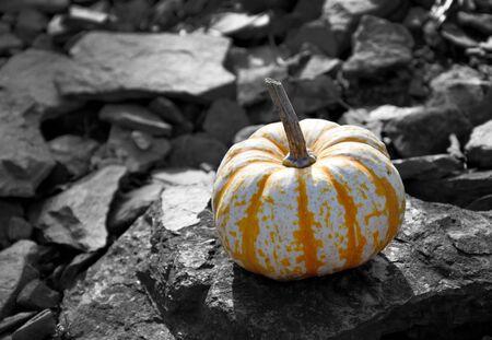 Decorative pumpkin stock photography Beautiful autumn decoration with pumpkin. Halloween pumpkin decoration. Decorative pumpkin on black and white background