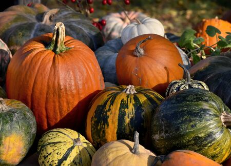 Pumpkins stock photography Colorful pumpkins decoration stock images. Pumpkins in the garden. Beautiful autumn decoration with pumpkins. Pile of pumpkins. | Фото со стока - 132369499