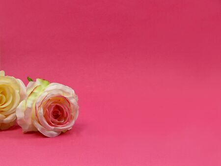 Two white roses stock images. White roses on pink background. White flowers decoration. Artificial flowers stock images. Flower on pink background with copy space for text