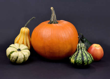 Different types of pumpkins and squash autumn still life stock images. Pile of pumpkins isolated on a dark background. Decorative pumpkins autumn still life stock photo. Beautiful autumn decorations