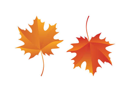 Beautiful autumn red orange maple leaves icon set vector. Autumn maple leaves isolated on a white background. Autumn foliage icon set vector
