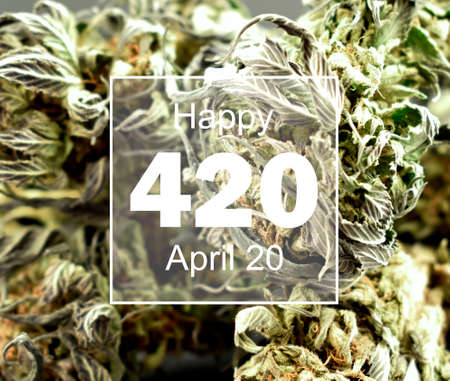 Happy 420 holiday with marijuana background stock images. Dried marijuana buds with number 420 stock photo. Dried hemp leaves images. Holiday 420 Poster, April 20. Important day
