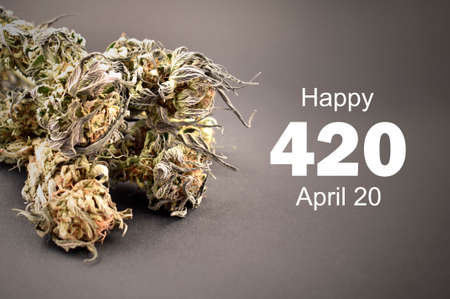 Happy 420 holiday with dried marijuana buds stock images. Dried marijuana buds with number 420 stock photo. Dried hemp leaves on a dark background images. Holiday 420 Poster, April 20. Important day Foto de archivo