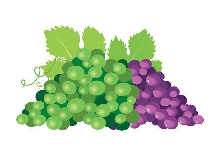 Green and red ripe grapes icon vector. Grapes icon isolated on a white background. Vektoros illusztráció