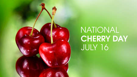 National Cherry Day stock images. Fresh red cherries on a green background stock photo. Ripe cherries reflection images. Cherry Day Poster, July 16. Important day