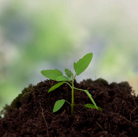 One spring green seedling stock images. Growing young sprout on a green background with copy space for text. Spring green seedling frame stock photo Imagens