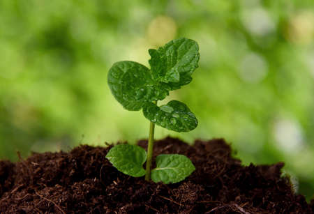 One spring green seedling stock images. Growing young sprout on a fresh green background. Growing green seedling herb detail stock photo Imagens
