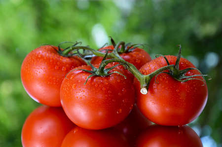 Bunch of juicy ripe tomatoes stock images. Red fresh tomatoes with water drops on a green background stock photo Imagens