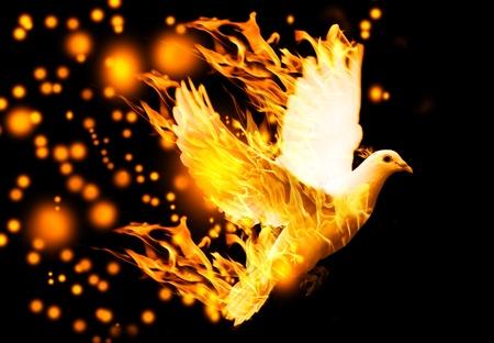 flying dove on fire, on black background Standard-Bild