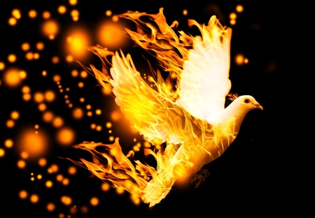 dove flying: flying dove on fire, on black background Stock Photo