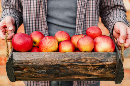 Fresh ripe organic red apples in a wooden box in male hands. Autumn harvest of red apples for food or apple juice on a brick wall background outside. Harvesting fruits. Healthy food.