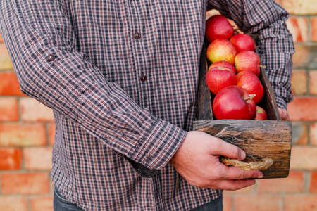 Fresh ripe organic red apples in a wooden box in male hands. Autumn harvest of red apples for food or apple juice on a brick wall background outside. Harvesting fruits. Healthy food Stock fotó