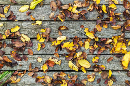 Autumn background composition on old wooden background. Fall, autumn leaves on Barn board with moss wooden texture vintage background. Copy space, flat lay, top view Stock fotó