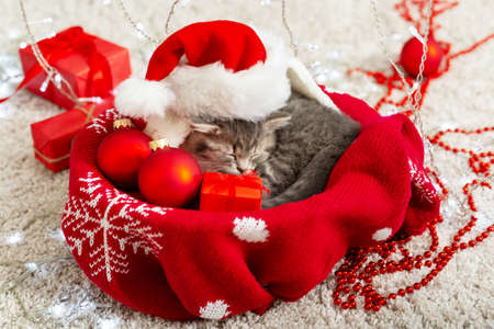 Christmas cat wearing Santa hat holding gift box sleeping on plaid under christmas tree. Christmas presents concept. Cozy home. Animal, pet, kitten.Close up,copy space. Christmas presents Stock Photo