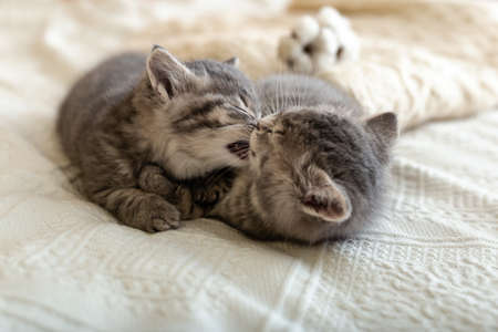 Cute tabby kitten sleeping, hugging, kissing on white paid at home. Newborn kitten, Baby cat, Kid animal and cat concept. Domestic animal. Home pet. Cozy home cat, kitten. Love
