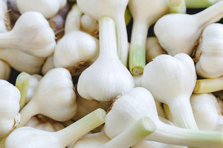 Fresh raw organic garlic as a background. Garlic for sale at farmers market or shop. Stock photo garlic as a food background