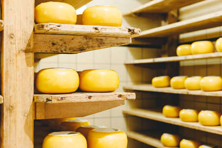 Many heads of yellow Dutch cheese in wax ripen on wooden shelves in a cheese factory. Small craft manufacturing business cheese. Stock photo
