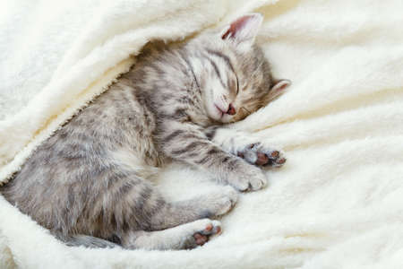 Gray striped kitten. Beautiful striped kitten sleeps on soft fluffy beige plaid. Cozy home with pet cat, animal baby. Top view with copy space. Sleeping cat portrait.