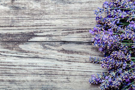 Fresh lavender flowers blossom on old rustic wooden board background with copy space for text. Flatlay french provence style lavender flower blossom. Lavender aromatherapy. Drying lavender flowers