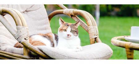 Relaxing white ginger cat laying on chair in garden outside on hot summer days. Garden landscape with chair table in nature. Rest in park cafe. Backyard exterior. Cat portret Long web banner.