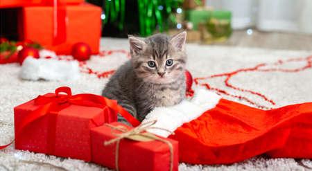 Cute tabby kitten near Christmas Santa Claus hat, garland lights, Xmas gifts decor. Pretty Baby cat. Home pets at New Year. Long web banner.