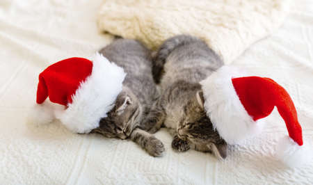 Christmas cats. Cute tabby kittens sleeping together in christmas hats. Santa Claus hats on pretty Baby cat. Kids animal kitty and cozy home concept. Home pets at New Year and Xmas.