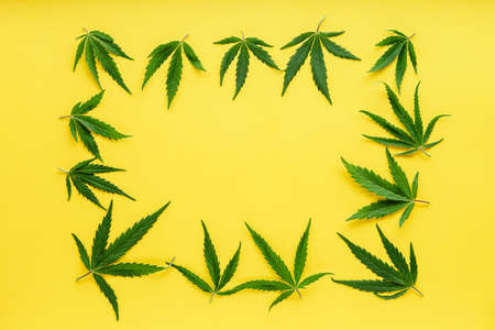 Cannabis leaf pattern frame. Green hemp leaves on color yellow background. Medical marijuana plant. Cannabis Sativa. Weed legalize. Copy space.