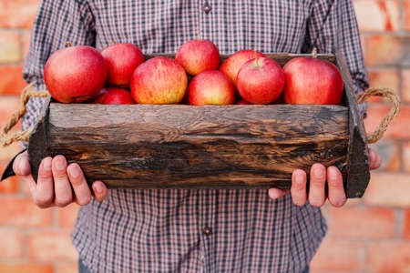 Fresh ripe organic red apples in a wooden box in male hands. Autumn harvest of red apples for food or apple juice on a brick wall background outside. Harvesting fruits. Healthy food 版權商用圖片