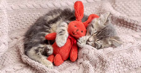 Baby cat sleeps on cozy blanket hugs a toy. Fluffy tabby kitten snoozing comfortably with plush rabbit hare on knitted pink bed. Long web banner with copy space. Banco de Imagens - 159940105