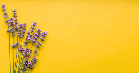 Fresh lavender flowers bouquet on yellow color background. Flatlay purple herbal flower blossom. Bouquet of lavender long web banner copy space for text. Lavender aromatherapy.