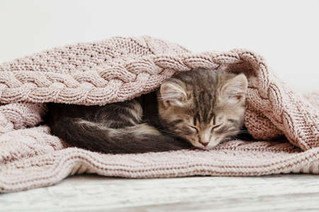 Baby cat curled up and sleep on cozy pink blanket. Fluffy tabby kitten snoozing comfortably on knitted bed. Kitten lying, relaxing Banco de Imagens